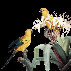 aves en el paraiso